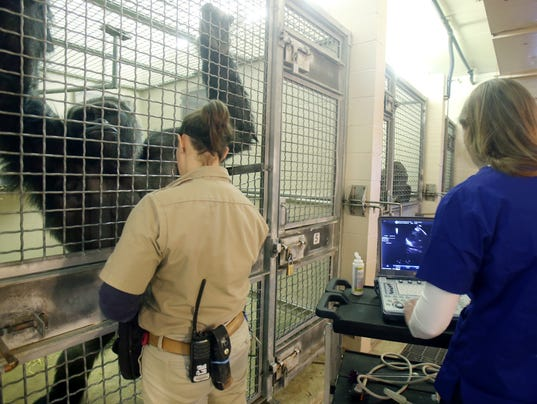 Gorilla heart tests