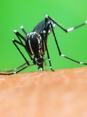 West Nile virus is transmitted to humans through mosquito bites.