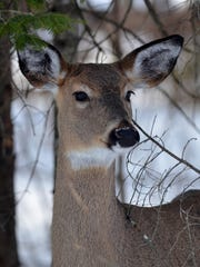 The Michigan Natural Resources Commission has approved new deer hunting regulations aimed at stopping the spread of a deadly disease among deer.