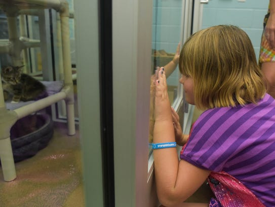 Astrid Cheatham, 6, looks into the cat kennels during