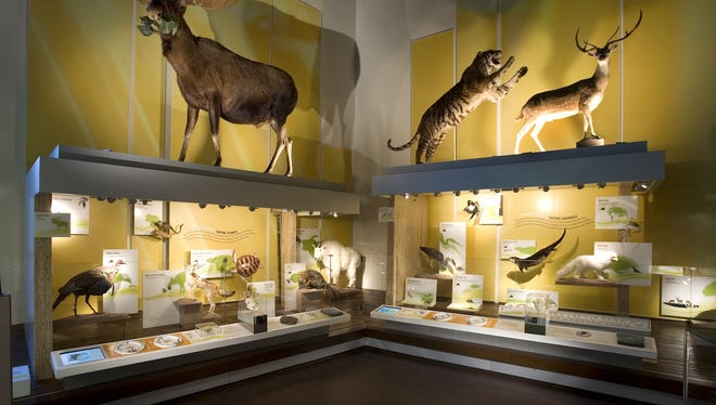 Displays at the Virginia Museum of Natural History in Martinsville.