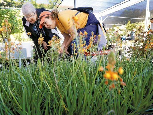Sherry Collins looks for native plants with her daughter Cezi Collins Saturday morning during UTEP's Flora Fest at the Centennial Museum.