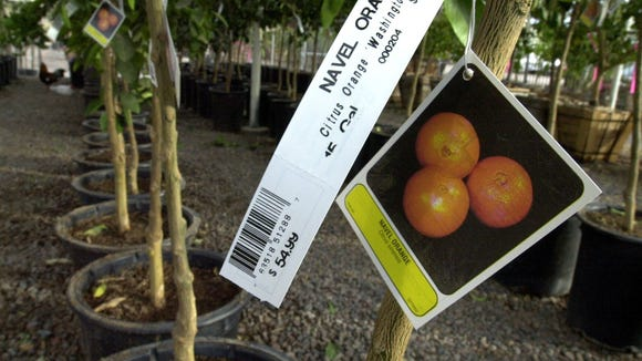 If you're planting citrus trees, maybe file away the