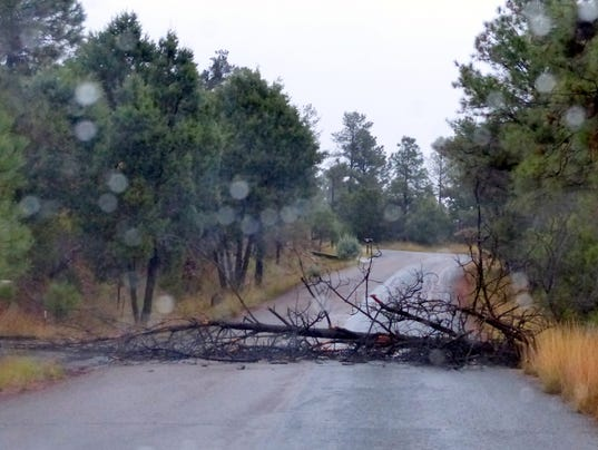 downed tree in ruidoso storms