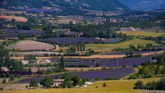 The purple patchwork of Provence.