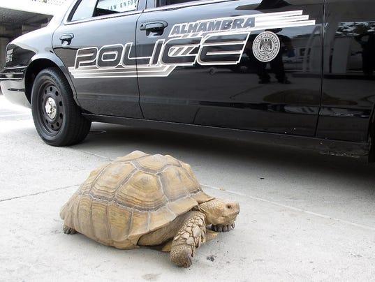 Giant Tortoise Found