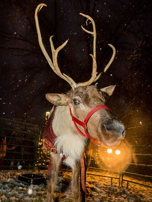 Mequon's annual Winter Wonderland event has been canceled this year, due in part to a lack of reindeer. Reindeer will still pull Santa in the annual Holiday Stroll parade.
