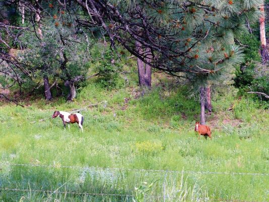 Two horses graze a pasture in Mescalero.