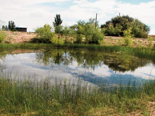 Courtesy photo   The city is making some groundwater rights available for use by the La Mancha Wetlands Restoration project to create a year-round home alongside the Rio Grande for ducks, fish, and other species.