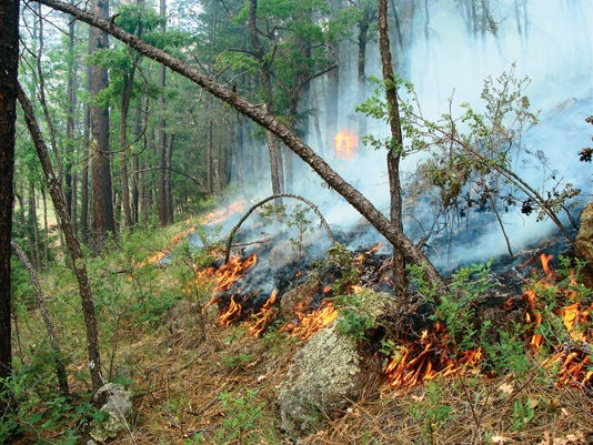 A number of wildfires continued burning in the Gila National Forest over the weekend. As of Sunday, the Pinon Fire, which is pictured, had grown to 1,600 acres. Courtesy Photo