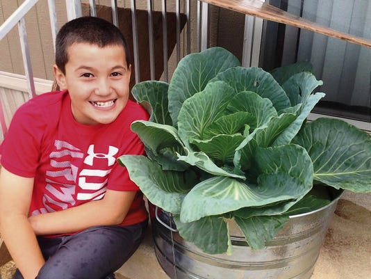 Photo courtesy of Janice Rodriguez   Kaleb Rodriguez, 8, sits beside a cabbage plant he said he waters daily and makes sure gets plenty of sunshine. The plant is destined to be the main ingredient in cabbage soup, Kaleb said.