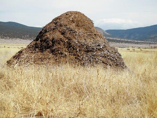 Salt cedars piled up for mulching.