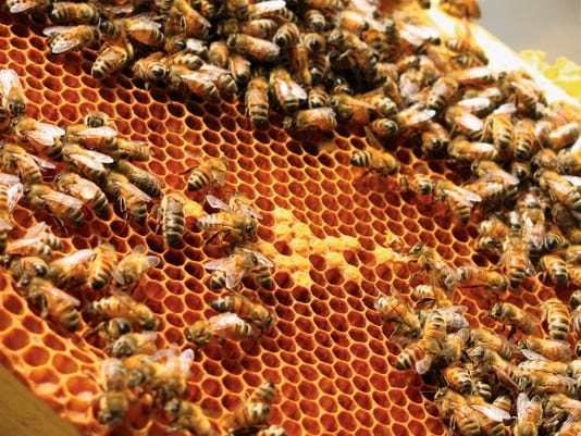 Bees in the hive.