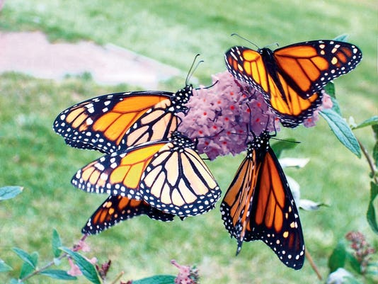 Ruidoso Hospice Foundation's Bruce Chapman said the annual butterfly release about helping those left behind let go.
