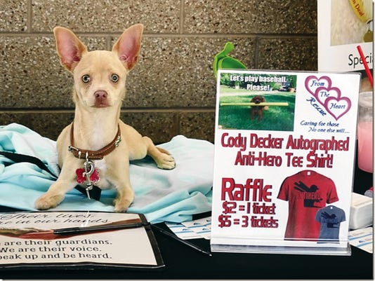 Five-month-old Scooter took center stage Sunday at the El Paso Chihuahuas Bark at the Park special event. The Chihuahua mix, who has was deformed front legs, was discarded when he was only 8 weeks old. Thanks to the support the team and fans, Scooter will get a wheelchair.
