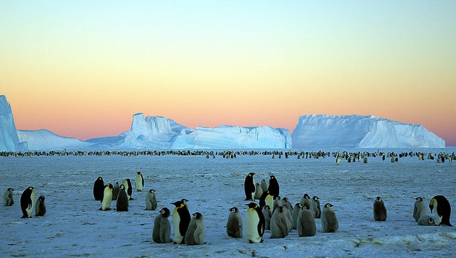 Adelie penguins congregate on an ice floe near Wilkes Land in the Australian Antarctic Territory in 2007.