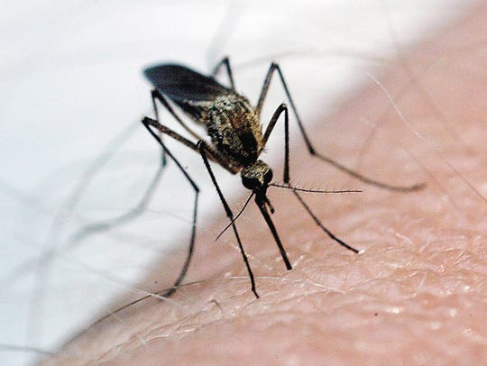 West Nile virus, transmitted by mosquitoes, has killed
