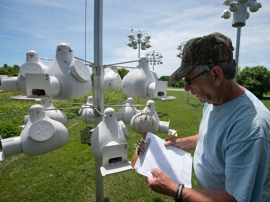 Ray Gingrich, of Dover, checks the status of purple martin nest in bird houses at Bombay Hook National Wildlife refuge in Smyrna. Bird deaths have been reported following a cold, wet spring.