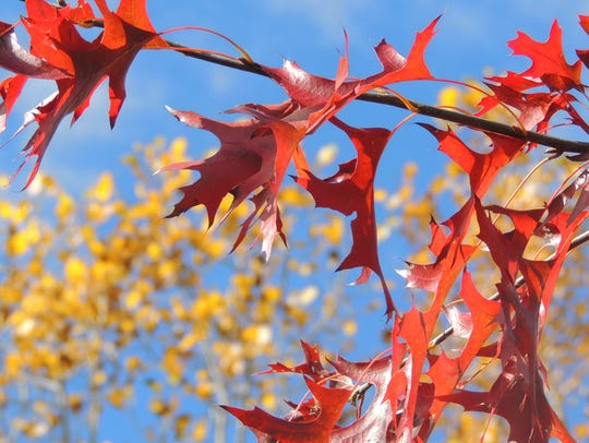 Turn fallen leaves, yard waste and kitchen scraps into