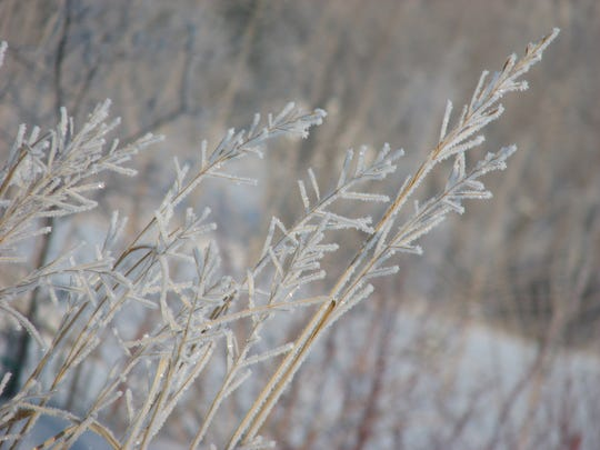 Ornamental grasses offer food and habitat for winter creatures.