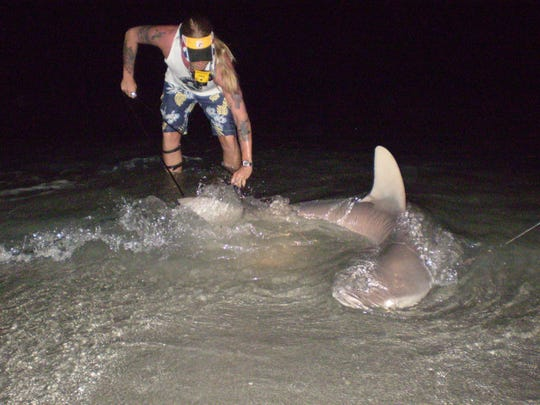 Shark Brother Brooks Paxton performs a tag and release on a sandbar shark.