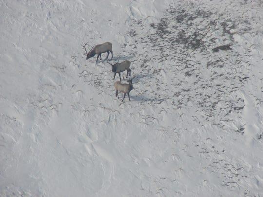 Tough winter taking toll on deer, antelope