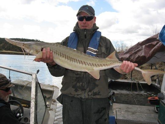 Steve Leathe holds a pallid sturgeon captured years