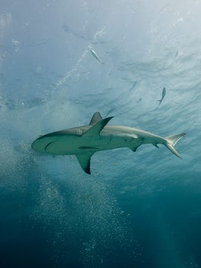 Sharks Traveling To New Locations