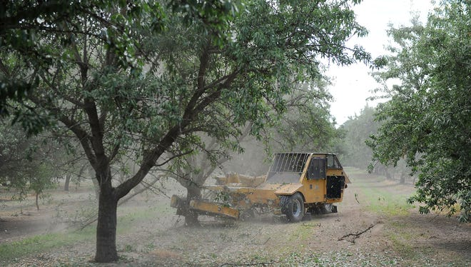 A machine shakes a tree and almonds fall to the ground during the summer harvest in California's Central Valley. Farmers have planted more almond and pistachio orchards in recent years as they have shifted to higher-value crops. Farm revenues have climbed, while groundwater levels have continued to fall.