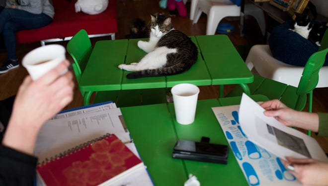 Cricket the cat lounges on a table next to guests on Friday, March 24, 2017 at Catfe Lounge in Ferndale.