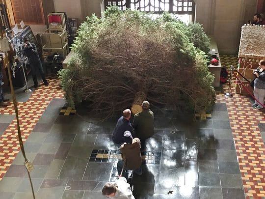 Purdue workers haul a 30-foot Christmas tree into the Memorial Union.