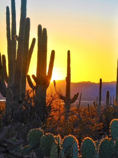 Saguaro National Park   Cactus, ponderosa pines, aspens and fir trees are all to be found at Saguaro National Park. The 92,000-acre park ranges between 2,300 feet on the west side of the part to 8,482 feet at the summit of Rincon Peak on the east side. Thanks to such an extreme elevation, Saguaro National Park is home to more than 1,700 species of plants and animals, making it one of the most biologically diverse parks in the country.   Details: Tucson, 520-733-5158, www.nps.gov/sagu, $.