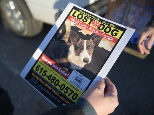 Fliers are being posted around Franklin looking for a lost dog named Kaylee.