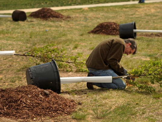 Ric Weidner prepares one of the cherry trees before planting it in the ground. The wind was howling and temperatures were hovering in the mid 40's but a couple hundred people turned out for the event. To celebrate the Japan United Sates Cherry Blossom Cen