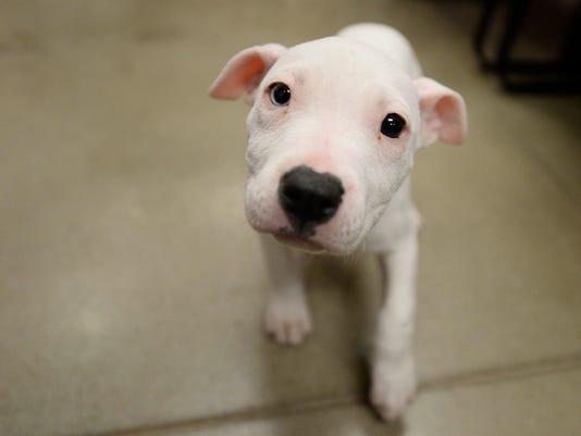 2-YDR-KP-121515-puppy