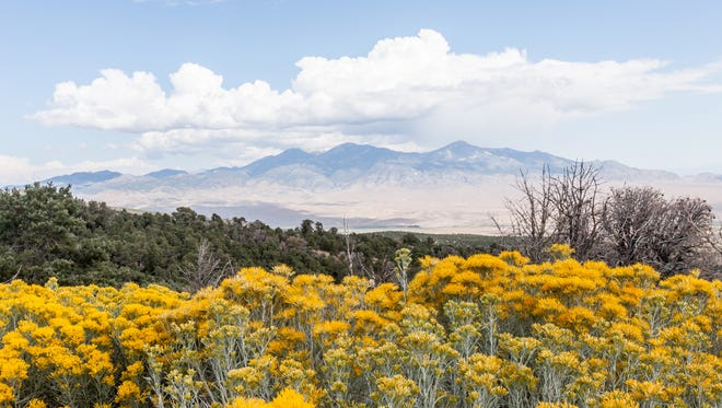 The sagebrush is a fitting symbol for Nevada, a state with vast desert land. The bush plant was also used by Native Americans for medicine and weaving mats.