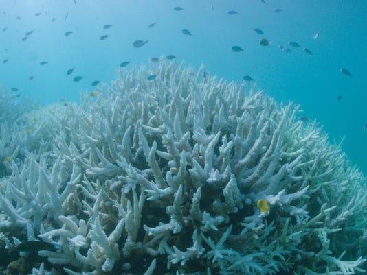EPA AUSTRALIA GREAT BARRIER REEF CORAL BLEACHING ENV ENVIRONMENTAL POLLUTION AUS QU