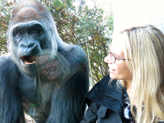 636003769720037627-amy-gorilla2.jpg