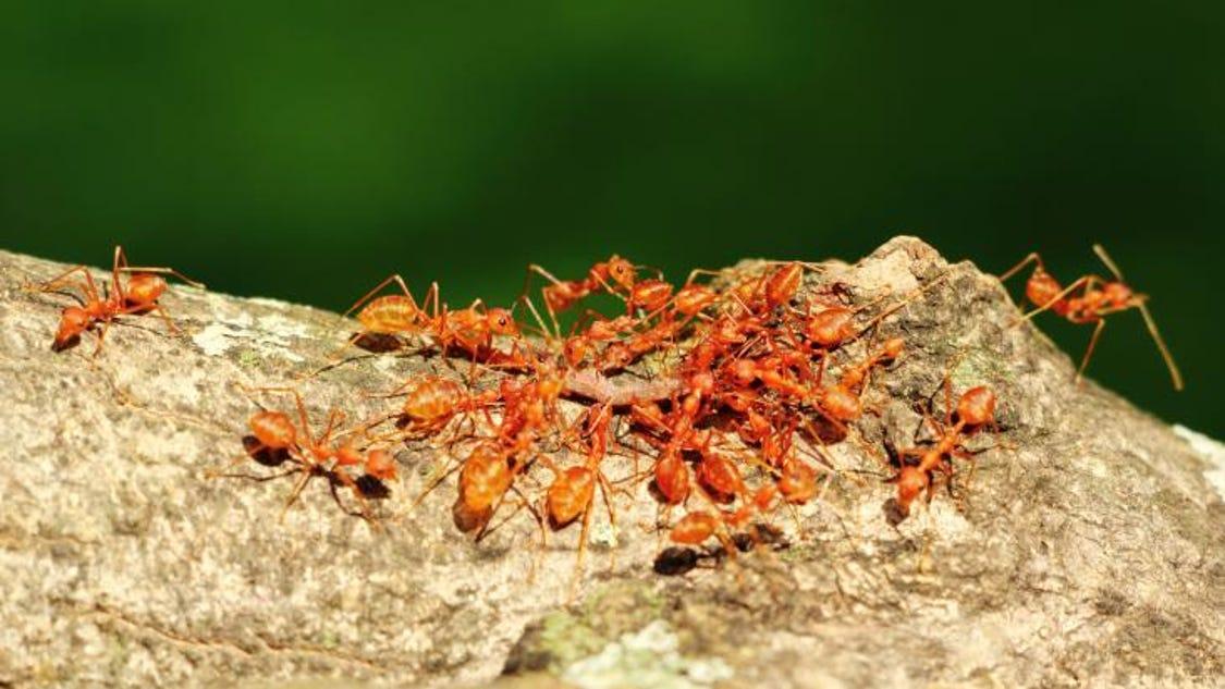 неожиданно может соник когда снятся муравьи Скажет барин