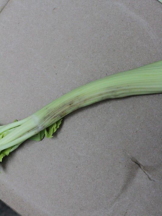 lygus celery