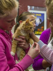 Students at Cedar Middle School hold kittens as part of an anxiety experiment, Thursday, Nov. 19, 2015.