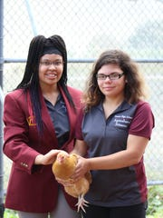 Simone Lewis-Turner (left) and Autumn Glass-Ruiz help care for the small flock of laying hens in the ag center at Vincent High School.