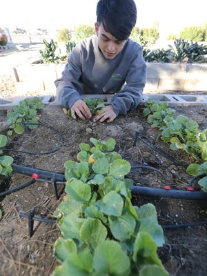 Stephen Stresow is the youngest El Pasoan to complete the Master Gardener program.