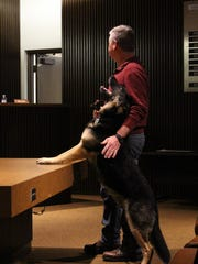 Retired Mansfield Police K-9 Xaro jumps on a table and looks up at his handler, retired Mansfield Police Officer Steve Hornback, during Mansfield City Council on Tuesday, March 7, 2017. Hornback, who retired after more than 20 years with the department, and Xaro, who retired after three years with the K-9 unit, were both recognized  during Tuesday's meeting.