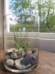 An air plant sits in a vase with rocks collected during family walks and outings.