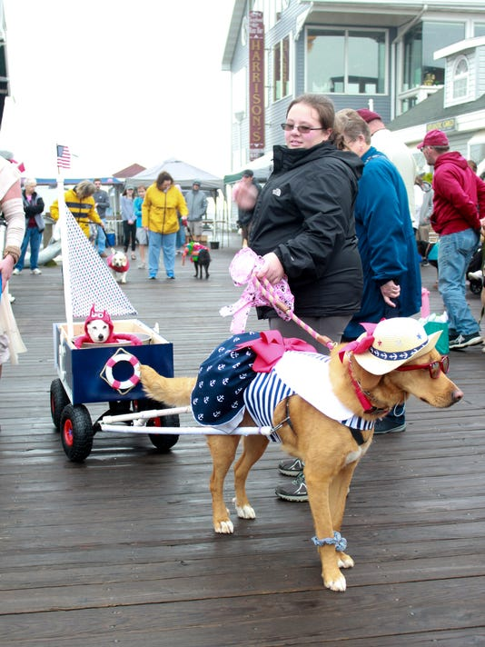 Boardwalkin-for-pets-Best-costume-Lilly.jpg