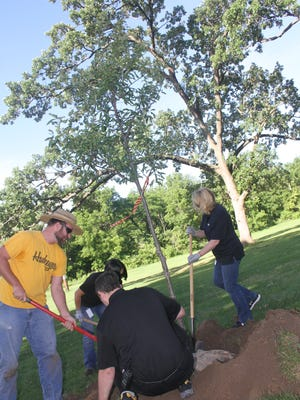 Employees with Whirlpool Amana are assisted by Lewis Bros. Tree Farm, Oxford, in planting trees at Middle Amana Park. The seven swamp white oak trees will replace trees in the park that recently died. The tree planting took place Wednesday, June 13.