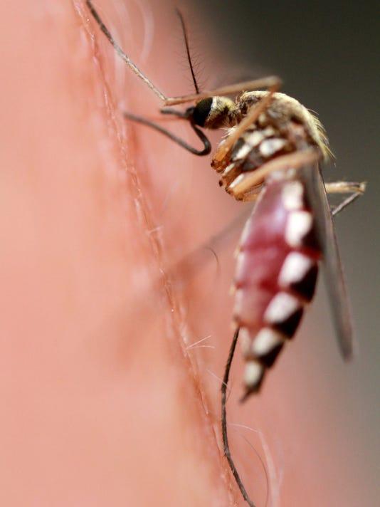 _media_DesMoines_DesMoines_2014_05_13__1400005816000-mosquito (2).jpg