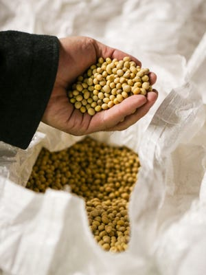 Soybeans used in the tofu-making process are shown at Iowa Food Manufacturing Inc. in Des Moines on Thursday. The business is Des Moines' first tofu production facility.