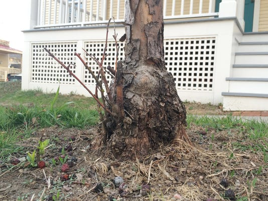 20150517 post mulch.JPG